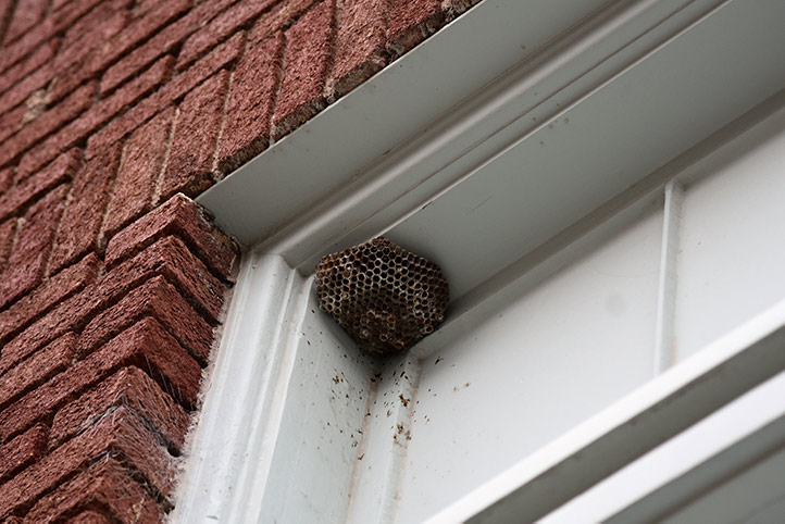 We provide a wasp nest removal service for domestic and commercial properties in Harlesden.